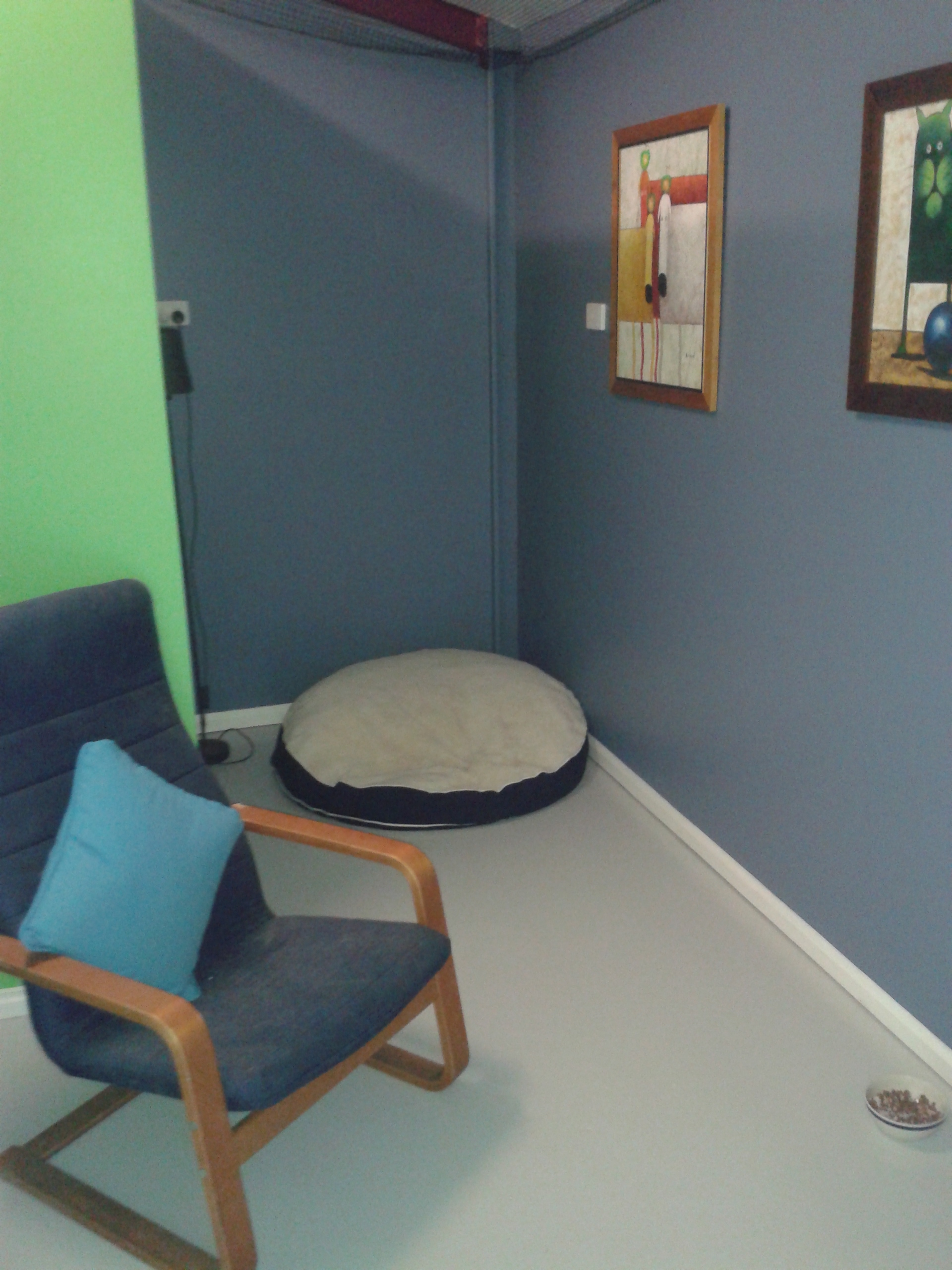 Gold Coast Cattery Room